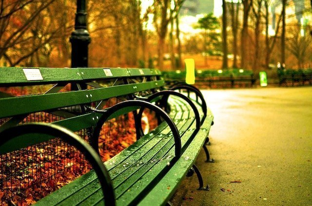 There are about 10,000 benches in the New York Central Park