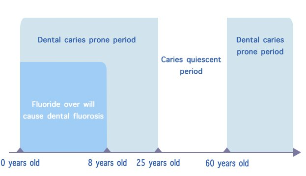 Dental caries period